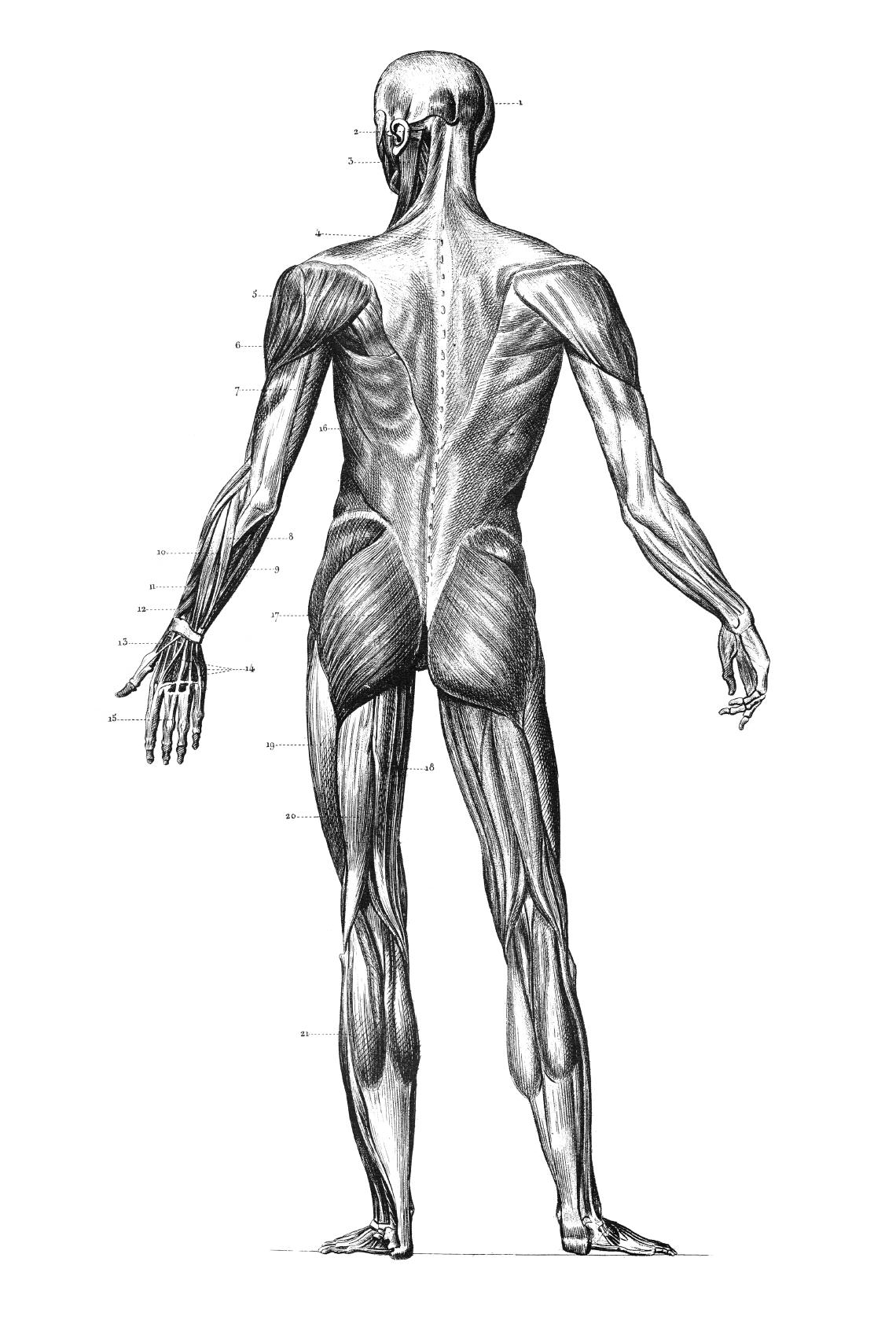 Ausgezeichnet Nieren Lage Bilder - Anatomie Ideen - finotti.info